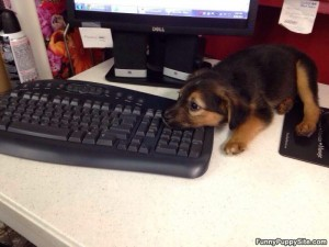 Keyboard_Puppy