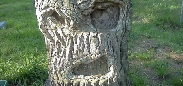 Η δημιουργικότητα της φύσης.